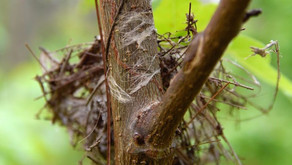 The Magic of Fasteners: Spider Silk and Nature's Velcro