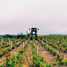 Labour de la vigne