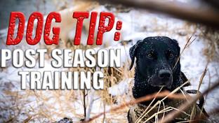 Dog Tip: Post Season Planning