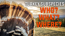 Chasing The Slam! Turkey Subspecies: Who, What, Where!