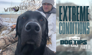 Extreme Conditions Dog Tips II