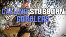 Turkey Tactics - Calling Stubborn Gobblers