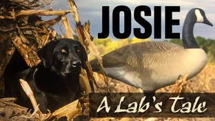 Josie - A Lab's Tale