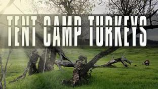Tent Camp Turkeys