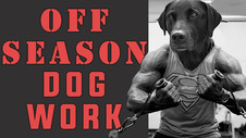 Training & Conditioning Older Dogs