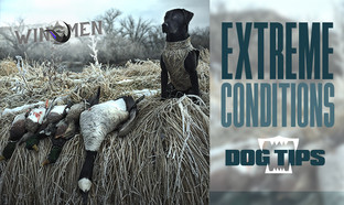 Extreme Conditions Dog Tips