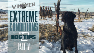 Extreme Conditions Dog Tips IV