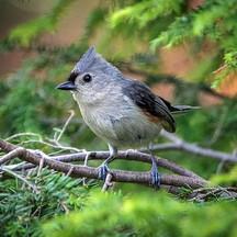 bird11.jpg