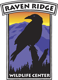 raven_logo_1.png