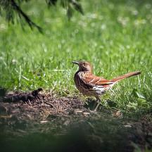 bird01.jpg