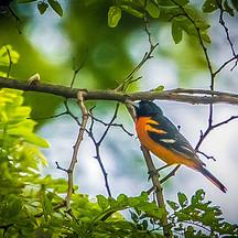 bird17.jpg