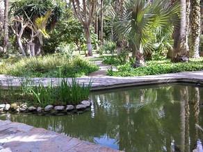 VR 360 video - Botanická zahrada Jardín Huerto del Cura, Elche