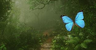 Papilonia - Motýlí dům Karlovy Vary