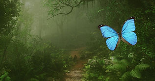 Papilonia - Motýlí dům, Karlovy Vary