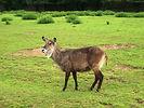 zoo dvur kozy