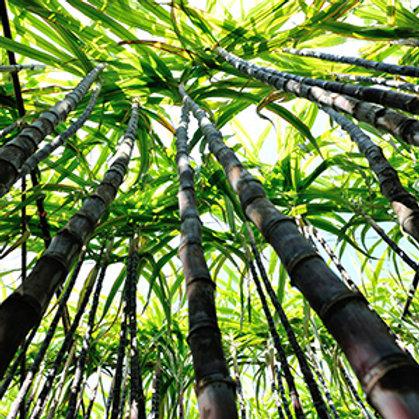 Bamboo & Sugar Cane Lotion