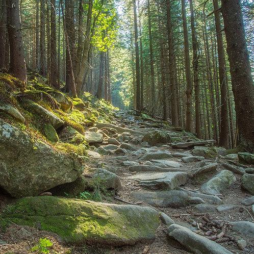 Forest Thyme Sachet