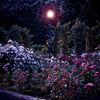 Silent Night Lotion