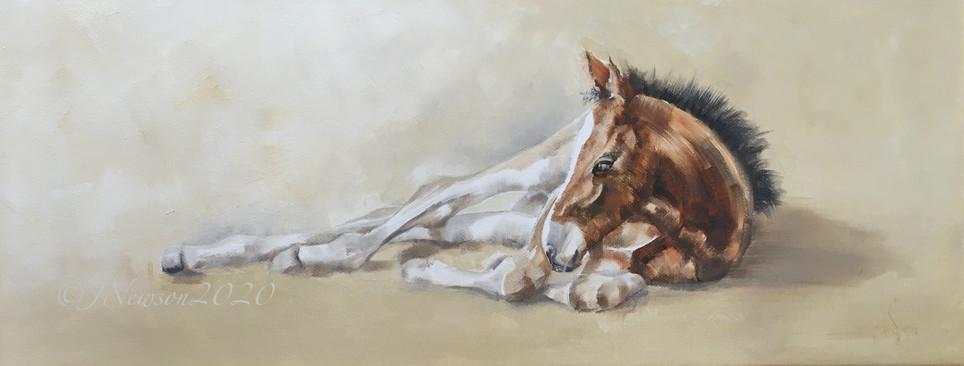 Resting foal  £145