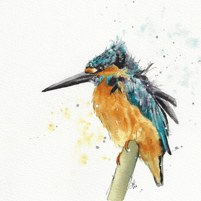 Kingfisher. **SOLD**