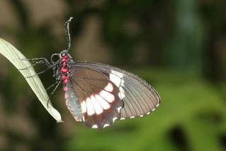 """Torna a Modica la """"Casa delle Farfalle"""", dal 12 marzo."""