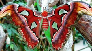 """Siracusa, domani mattina l'inaugurazione della """"Casa delle farfalle"""