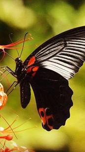 Una magia fatta di centinaia di farfalle