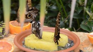 Il Tg5 parla della Casa delle Farfalle