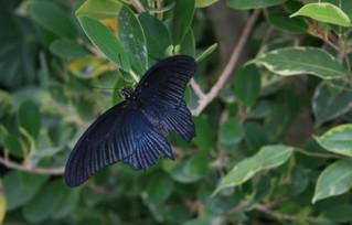 Casa delle farfalle apre a Siracusa tra piante e temperature tropicali