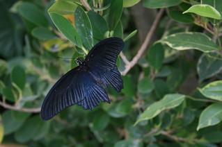 Aperta casa delle farfalle a Siracusa Tra piante ornamentali e temperature tropicali
