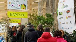 Tutti pazzi per la Casa delle farfalle: in migliaia in fila per visitare l'istallazione a Palazz