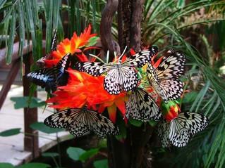 A Siracusa arriva la casa delle farfalle