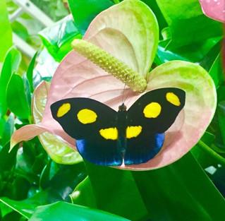 Sogno: la prima nata a La casa delle Farfalle