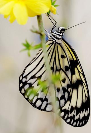 A Modica aperta la Casa delle Farfalle. Tante novità