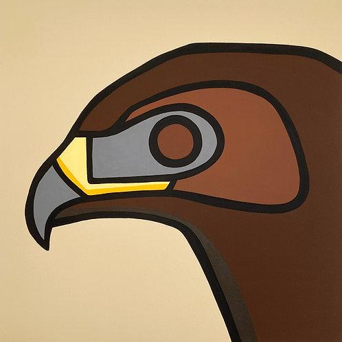"""Hawk    •      24"""" x 24"""""""