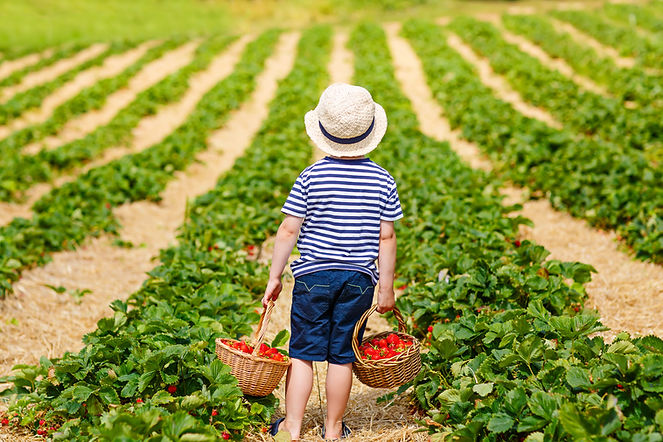 Happy adorable little kid boy picking an