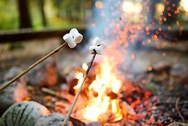 Roasting marshmallows on stick at bonfir