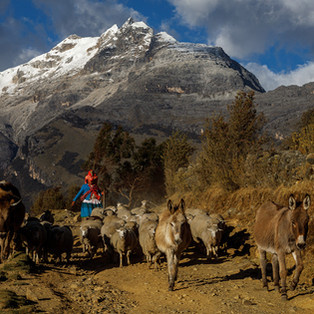 Andean II