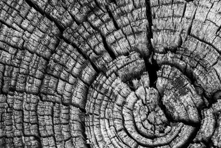 nikon_d7100_redding_california_tree_ring