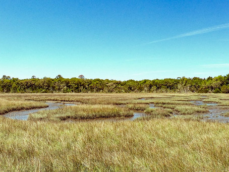 Timacuan State Preserve