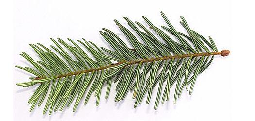 Best Christmas Trees, Christmas Trees Lafayette, Christmas Trees Niwot, Christmas Trees Boulder, Christmas Tree Lot, Christmas Tree Farm, Fresh Cut Christmas Trees, Santa Visit, Poinsettias, Wreaths, Garland, Christmas Trees in Boulder County