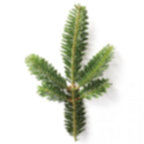 Best Christmas Trees, Christmas Trees Lafayette, Christmas Trees Niwot, Christmas Trees Boulder, Christmas Tree Lot, Christmas Tree Farm, Fresh Cut Christmas Trees, Santa Visit, Poinsettias, Wreaths, Garland, Christmas Trees in Boulder County