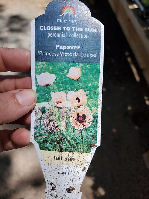 Poppy Princess Victoria Louise #1 Gallon