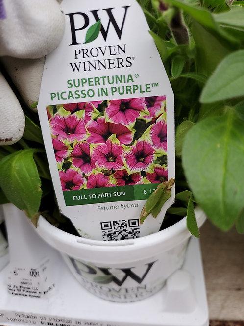 Petunia Picasso in purple 4.25 proven winner