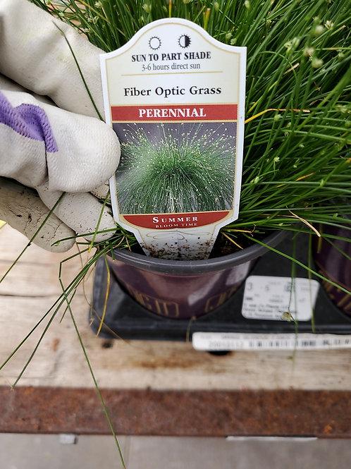 Grass fiber optic 4.25 premium annual