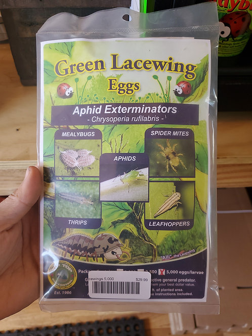 Green Lacewing Aphid Exterminator