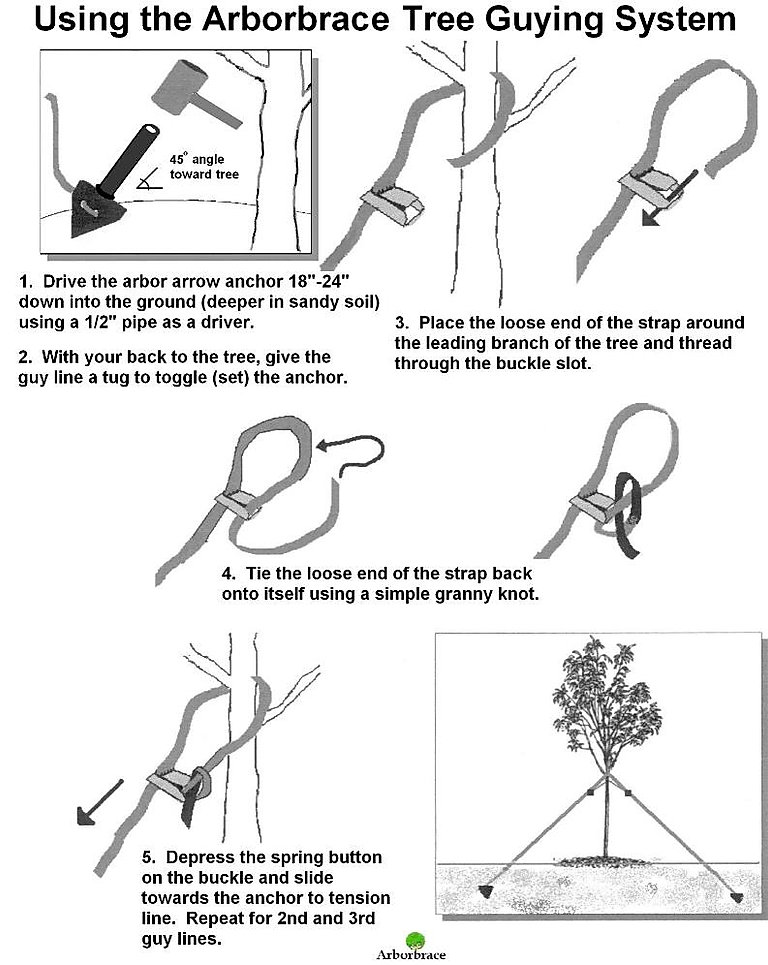 ARBORBRACE HOW TO.jpg