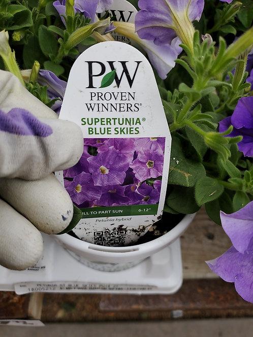 Petunia blue skies 4.25 proven winner