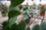 Urban Garden louisville colorado