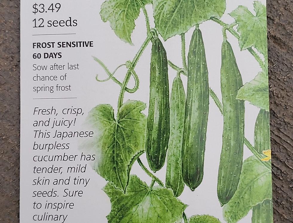 Cucumber Tasty Green Organic